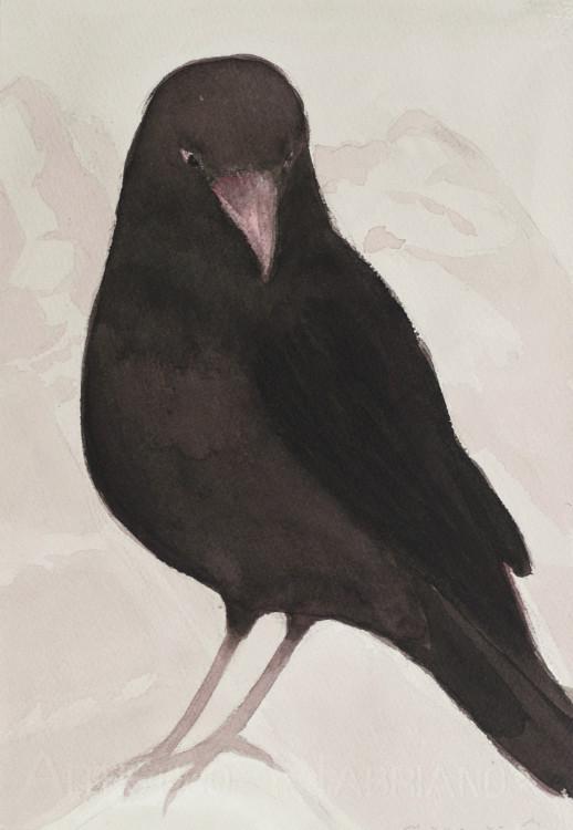 1.Blackbird1