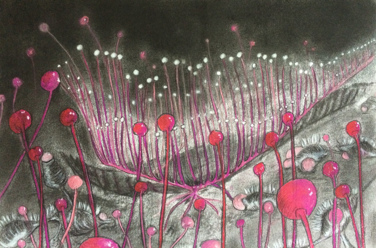 Susana-Mulas-Lastra_Untitled_25x35cm_Pastel-Siberian-chalk-charcoal-on-paper